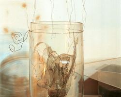 acquario_in_vaso
